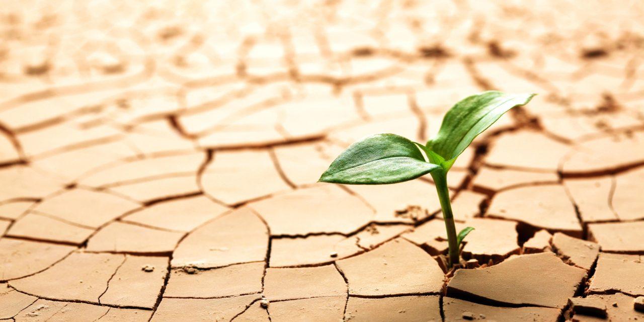 LA RELACIÓN ENTRE CAMBIO CLIMÁTICO Y COVID-19 NO SE PUEDE SOSLAYAR