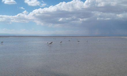 UCN inicia completo plan de monitoreo para proteger lagunas altiplánicas de la región de Antofagasta