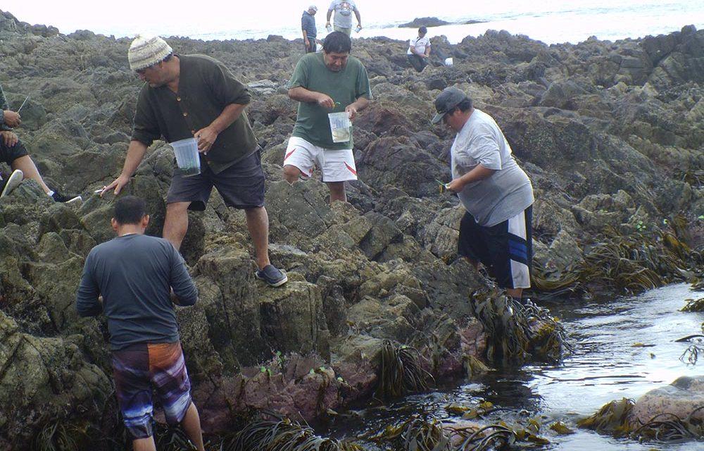 Con producción de semillas buscan repoblar praderas marinas de macroalgas