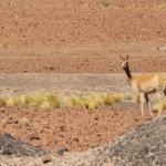 Lanzan campaña por la preservación de la fauna local