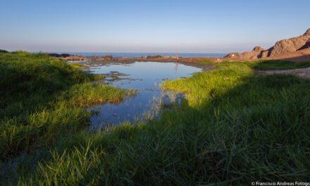 Consejo de Ministros para la Sustentabilidad declara Santuario de la Naturaleza Humedal La Chimba de Antofagasta
