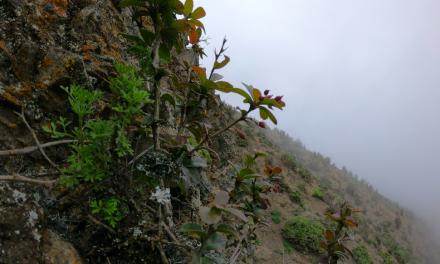 Presentan avances de estudio que investiga la flora costera de la región de Antofagasta