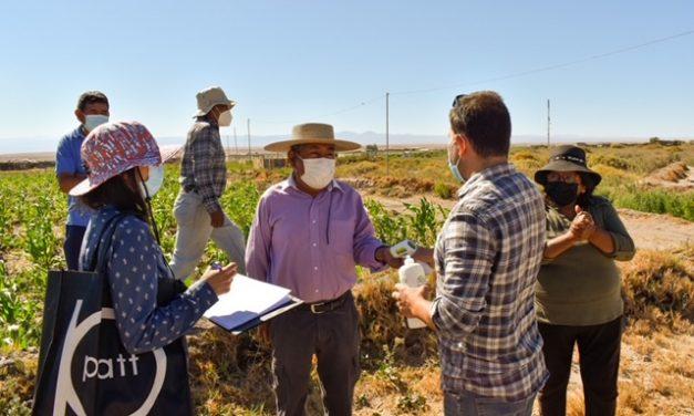 La dura lucha de la agricultura loína contra la maleza Mostaza Negra