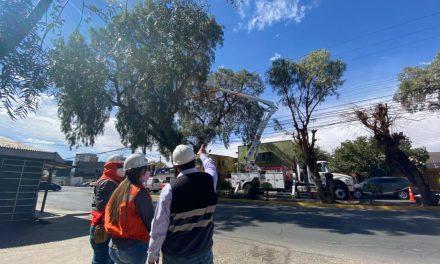 Seremi de Energía y SEC inspeccionaron en Calama trabajos de poda y despejes de arboles