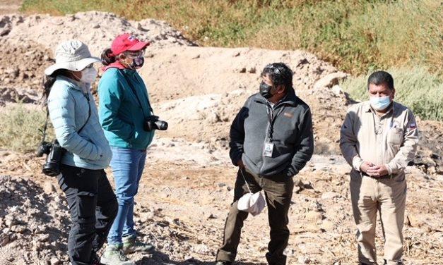 Intensifican trabajos en Ojo de Opache para reincorporar a la Ranita del Loa a su hábitat natural